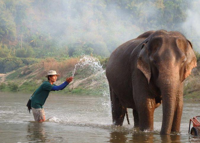 Voir les éléphants en Thaïlande