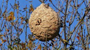 Comment procéder à la destruction nid de frelons asiatique guêpes à Aix-en-Provence ?