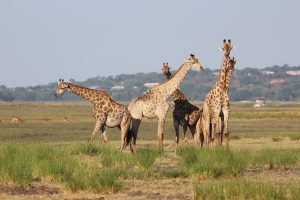 voyage-botswana